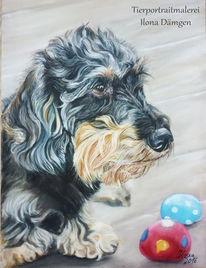 Rauhhaardackel, Pastellmalerei, Tierportrait, Dackel