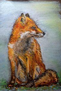 Natur, Fuchs, Zeichnungen