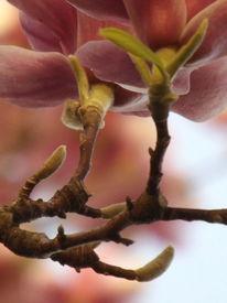 Frühling, Blühen, Rosa, Magnolien