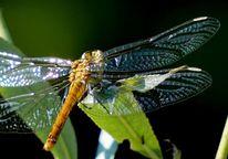 Grün, Flügel, Blätter, Fotografie