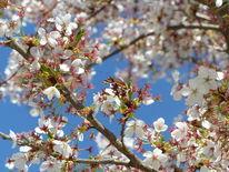 Admiral, Frühling, Sonne, Schmetterling