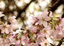 Äste, Frühling, Gegenlicht, Blüte