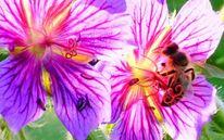 Biene, Frühling, Blüte, Gegenlicht