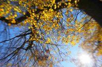 Laub, Baum, Herbst, Fotografie