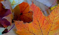 Laub, Blätter, Loch, Beige