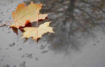 Herbst, Baum, Blätter, Regen