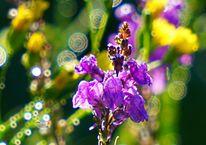 Blüte, Knospe, Licht, Zauber