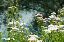 Baumschatten, Wiesenblumen, Weiß, Blau