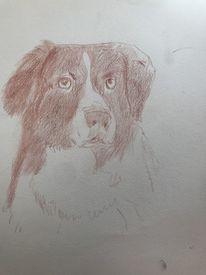 Portrait, Rötel, Hund, Zeichnungen