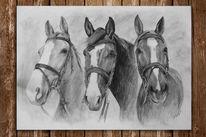 Zeichnung, Bleistiftzeichnung, Geschirr, Pferde