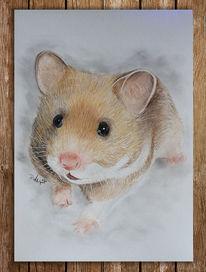 Hamster, Zeichnung, Zeichnungen