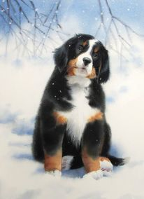 Tiere, Hund, Winter, Schnee