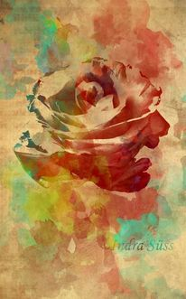 Rose, Photoshop, Wasserfarben, Digitale kunst