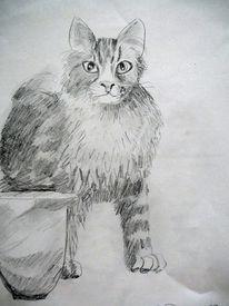 Kater, Mietze, Katze, Zeichnungen
