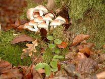 Pilze herbst laub, Fotografie