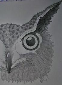 Eule, Auge, Portrait, Schwarz