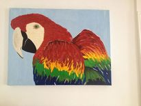 Tiere, Vogel, Papagei, Portrait