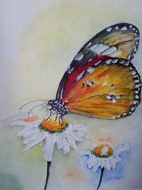 Schmetterling, Sommer, Malerei, Tiere