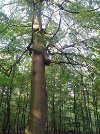 Wald, Baum, Naturgeist, Fotografie