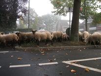 Schaf, Stadt, Nebel, Fotografie