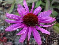 Natur, Pflanzen, Blumen, Fotografie