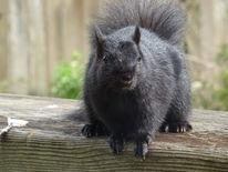 Eichhörnchen, Natur, Fotografie