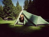 Hund, Natur, Zelten, Fotografie