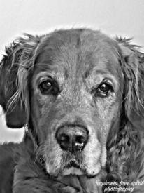 Hund, Schwarz, Weiß, Fotografie