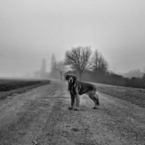 Hund, Natur, Tiere, Fotografie