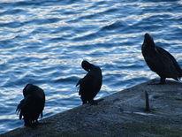 Meer, Vogel, Tiere, Fotografie