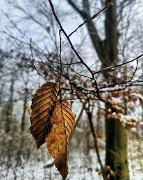 Natur, Fotografie
