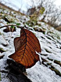 Natur, Winter, Schnee, Blätter