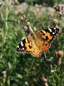 Pflanzen, Insekten, Schmetterling, Fotografie