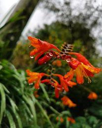 Pflanzen, Natur, Regen, Fotografie
