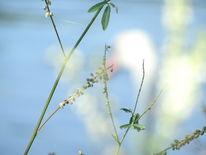 Pflanzen, Schwan, Natur, Fotografie