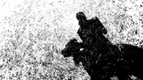 Schatten, Gesellschaft, Tiere, Fotografie