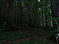 Wald, Natur, Dunkel, Fotografie