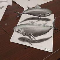 Bleistiftzeichnung, Kreide, Fisch, Zeichnungen