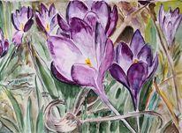 Krokus, Lila, Frühling, Aquarell