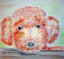Wuschel, Hundeaugen, Zeichnung, Zeichnungen