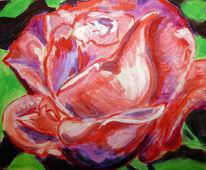 Rosa, Lila, Rose, Grün