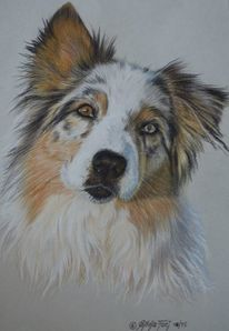 Zeichnung, Buntstiftzeichnung, Hund, Portrait