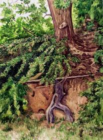 Rügen, Aquarellmalerei, Wurzel, Baum