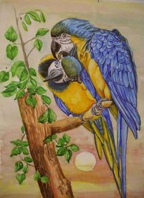 Vogel, Tiere, Aquarell, Zoo