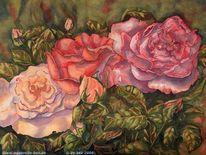 Pink, Rose, Blumen, Licht