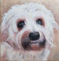 Hund, Weiß, Dame, Malerei
