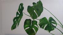 Pflanzen, Blätter, Grün, Monstera blätter