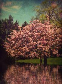 Wasser, Landschaft, Natur, Baum