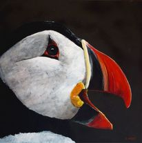 Rot schwarz, Tiere, Weiß, Vogel