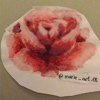 Rose, Pflanzen, Rosa, Natur